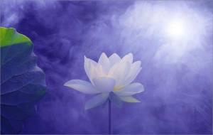 Lotus on BLue!