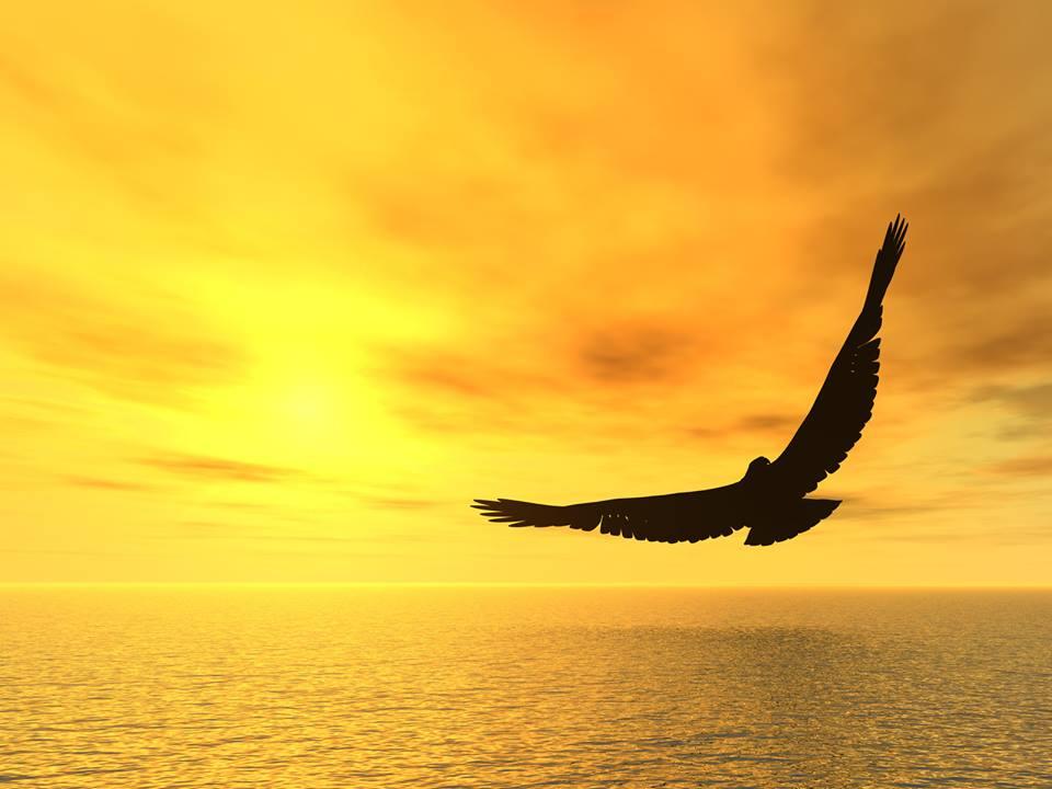 free bird in a golden sky