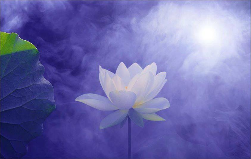 Pure and Free as a Lotus
