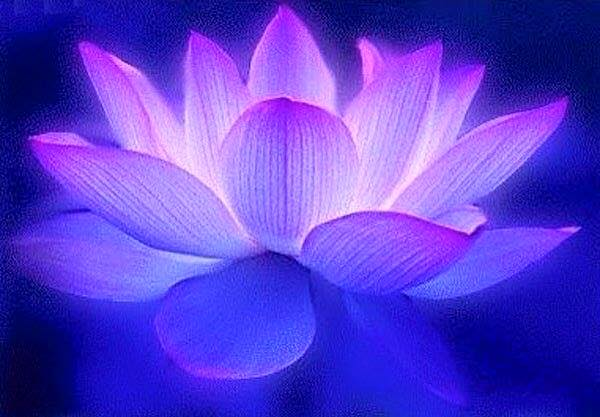 luminous-lotus