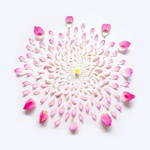 Flower Petals in shape of soul