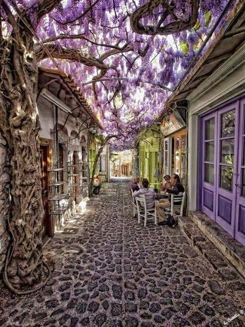wisteria and cobblestone narrow walkway cafe