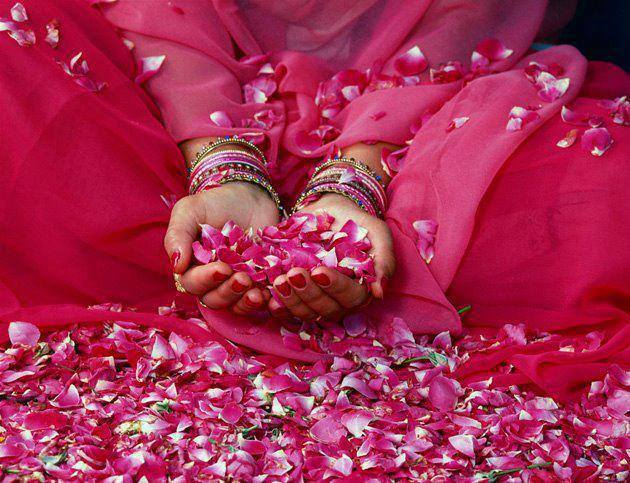 Drenched in Rose Petals
