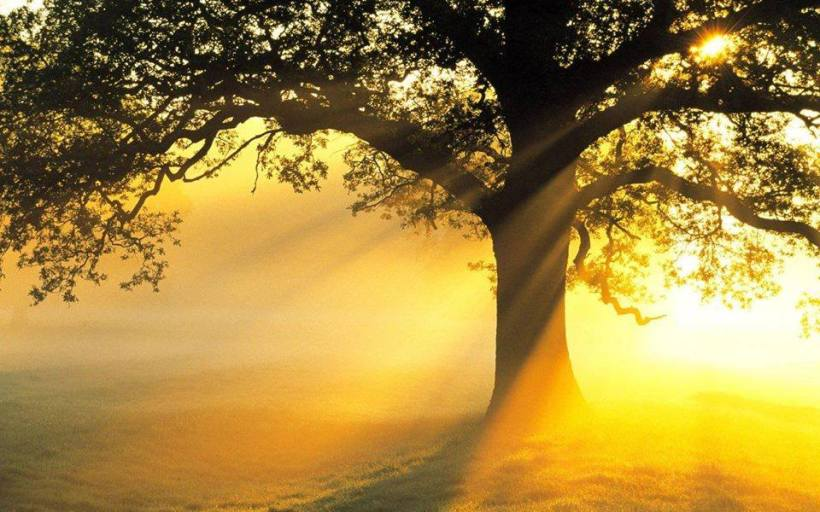 golden light and tree