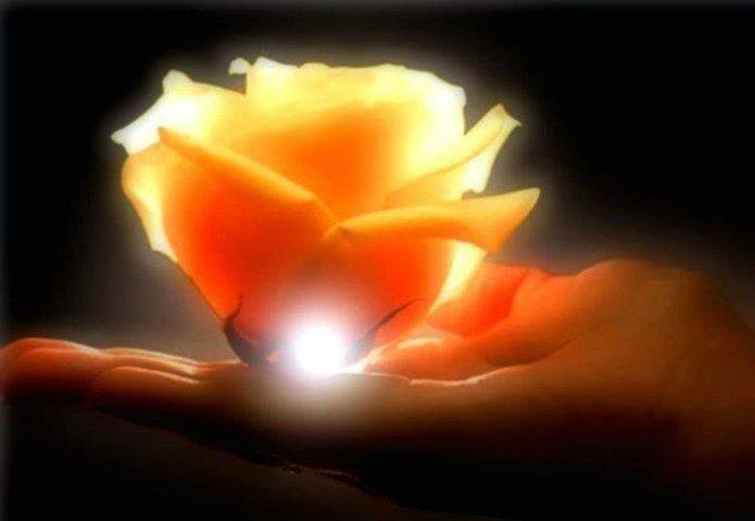 rose on hand with light